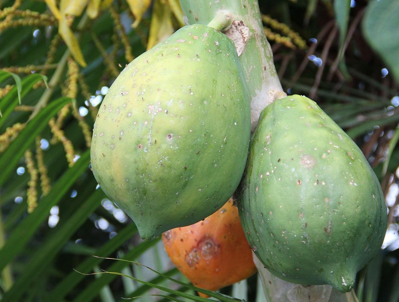 papaya 1601728643