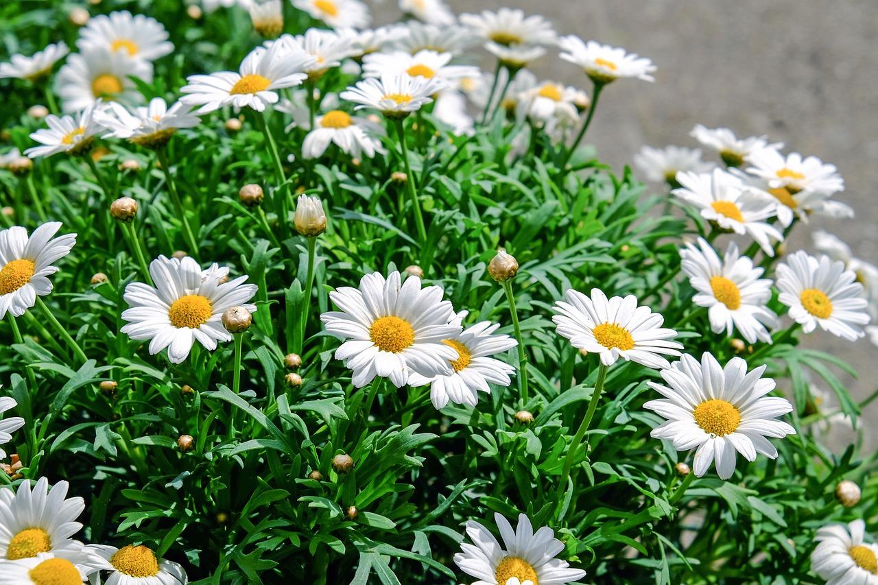 garden 1617723609