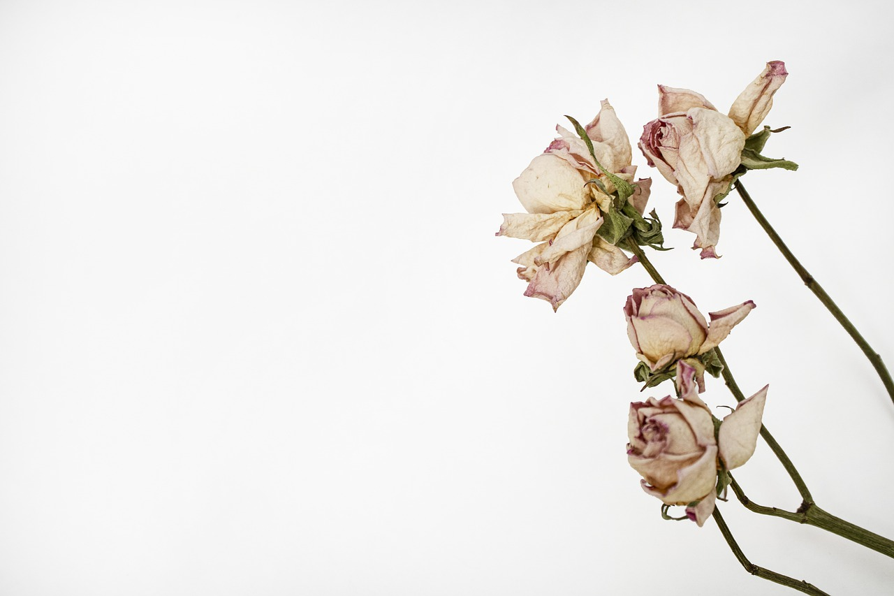dried flowers 1623829697